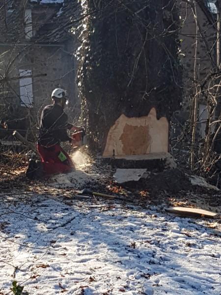 abattage d'arbre la charmille paysagiste