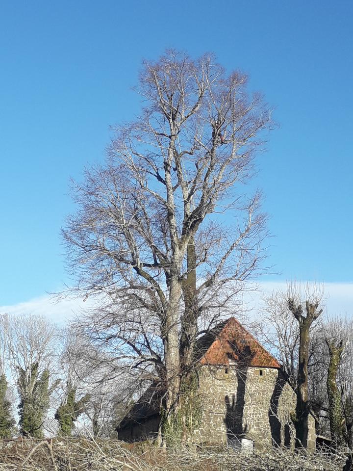 élagage arbre la charmille paysagiste