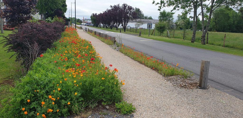 aménagement anglards de salers: semis gazon fleuris, pose de clôture ganivelle et de potelets la charmille paysagiste